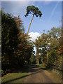 TQ0083 : Beeches Way by Shaun Ferguson