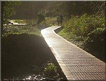 SX8963 : Boardwalk, Cockington Valley by Derek Harper
