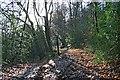 SU8931 : Path junction on Marley Wood by Hugh Craddock