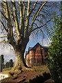 SX9064 : Tree by Sharon House by Derek Harper