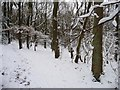 SE1914 : Snowy path in Lepton Great Wood by Christine Johnstone