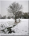 TL4356 : Snow by the river by John Sutton