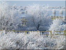 TL5392 : Hoar frost and cattle pens - The Ouse Washes near Welney by Richard Humphrey