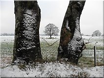 H5472 : A tree behind two trees, Bracky by Kenneth  Allen