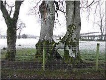 H5472 : United trees, Bracky by Kenneth  Allen