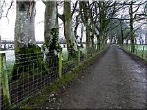 H5472 : Tree-lined lane, Bracky by Kenneth  Allen