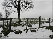 H5572 : Wintry at Bracky by Kenneth  Allen