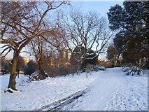 TQ2882 : The English Gardens, Regent's Park in snow by Marathon