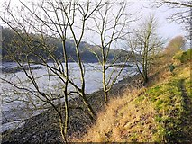 NZ1465 : Path on north bank of River Tyne by Andrew Curtis
