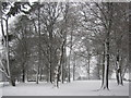 ST1074 : Trees at Coedarhydyglyn Park by John Light