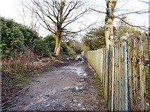 SJ9599 : Muddy footpath by Gerald England
