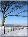 NY0884 : Tree and fence by Lynne Kirton