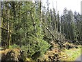 H4981 : Windthrown trees, Gortin Glen Forest by Richard Webb