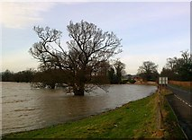 SJ5409 : Severn floods close to Longner Lodge, Atcham by Peter Evans