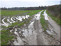 SY8895 : Muddy Track to Waterley Wood by Nigel Mykura