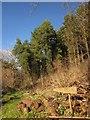 SX7685 : Steward Wood by Derek Harper