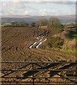 SX7785 : Arable field near Pepperdon Down by Derek Harper