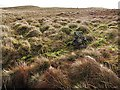 NS5880 : Isolated rock in the moorland above Fin Glen by wrobison