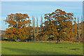 ST7866 : Trees near the River Avon by Wayland Smith