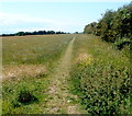 ST0666 : Track through a field, Rhoose by Jaggery