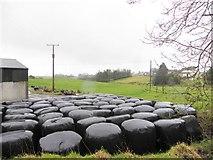 H5575 : Silage bales, Merchantstown Glebe by Kenneth  Allen