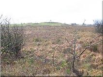 H5575 : Bogland, Altdrumman by Kenneth  Allen