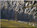 SD4972 : Bird watcher in Warton Crag Quarry by Karl and Ali