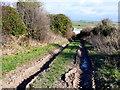 SY8196 : Muddy Farm Track by Nigel Mykura