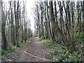 SE5301 : Woodland ride, Sprotbrough Plantation by Christine Johnstone