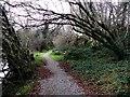 H4167 : Riverside walk, Drudgeon by Kenneth  Allen