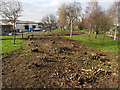TQ4178 : Felled trees, Eastmoor Street garden by Stephen Craven