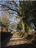 SX7087 : Lane to Chagford by Derek Harper