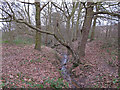 TQ6887 : Stream in Long Wood,  Langdon Nature Reserve by Roger Jones