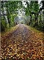 SU3867 : Path near Kintbury by Gillie Rhodes