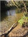 SX7158 : River Avon at Avonwick by Derek Harper