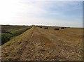 TL3689 : Fields on Dyke Moor westwards by Andrew Tatlow