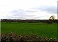 TL1243 : Fields west of Bedford Road by Andrew Tatlow