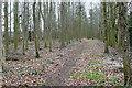 SP3823 : Green Eye Way plantation by Graham Horn