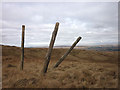 NY5802 : Wooden posts, Roundthwaite Common by Karl and Ali