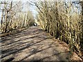 TQ1724 : Downs Link Path by Paul Gillett