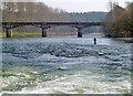 NT6032 : The River Tweed at Mertoun Bridge by Walter Baxter