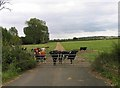 TL0875 : Beasts in a field by Andrew Tatlow
