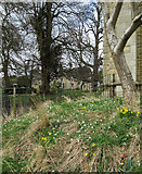 SP9277 : Cranford St Andrew: spring flowers and Dairy Farm by John Sutton