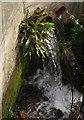 SX8770 : Outflow, Aller Brook by Derek Harper