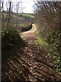 SX8766 : Green lane joining Saturday's Lane by Derek Harper