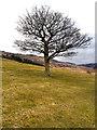 SE0103 : Tree above Dove Stone Reservoir by David Dixon
