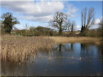 TL4259 : Park and Ride pond by Hugh Venables