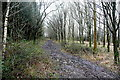 SP4514 : Bridleway in Bladon Heath by Graham Horn