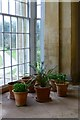 SO8844 : Plants in the Temple Greenhouse by David Lally