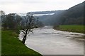 SO5305 : The River Wye by David Lally